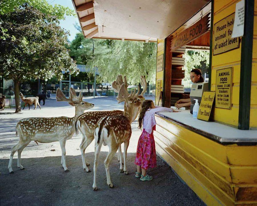 Schwartz23 Мир Амелии   девочка и ее животные