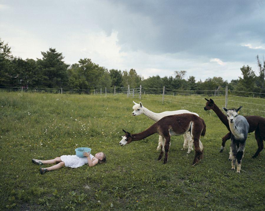 Schwartz28 Мир Амелии   девочка и ее животные