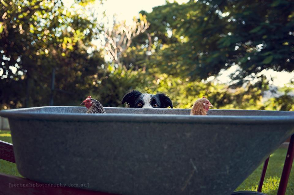 Serenah26 Фотограф Серена Ходсон и ее четвероногие друзья