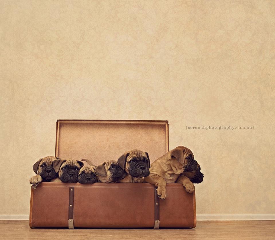 Serenah28 Фотограф Серена Ходсон и ее четвероногие друзья