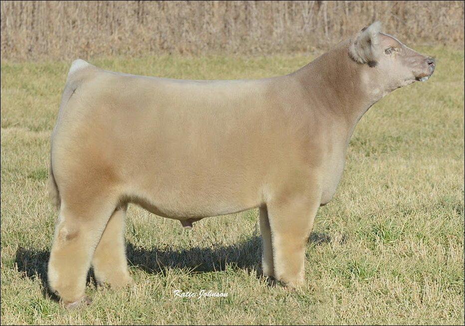 006 vacas de peluche hermosa vaca de Iowa