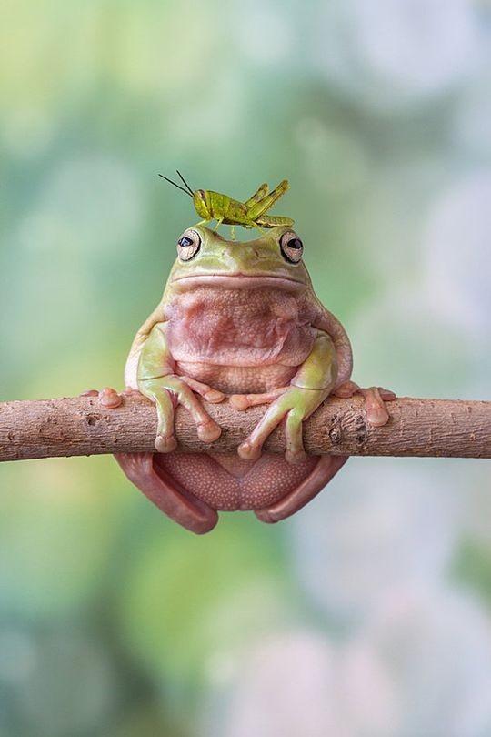 frogs01 Царевны лягушки