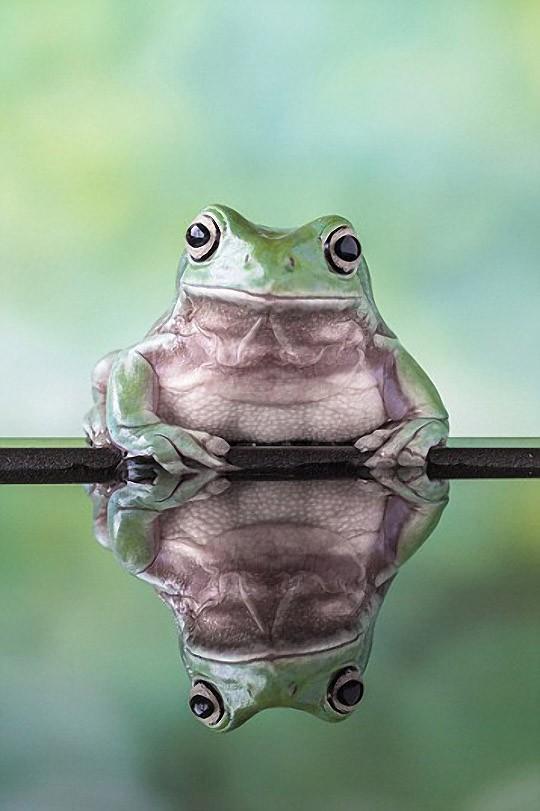 frogs02 Царевны лягушки