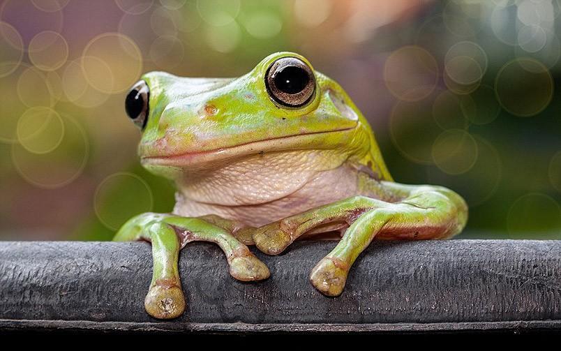frogs05 Царевны лягушки
