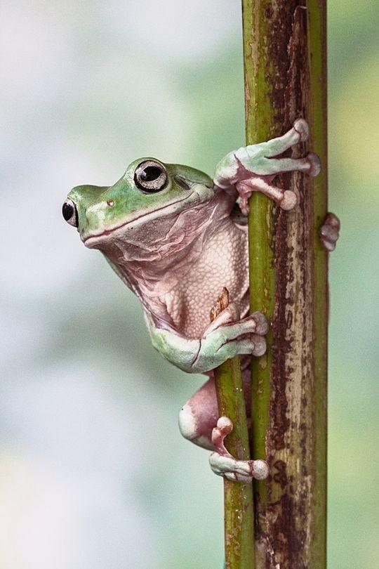frogs07 Царевны лягушки