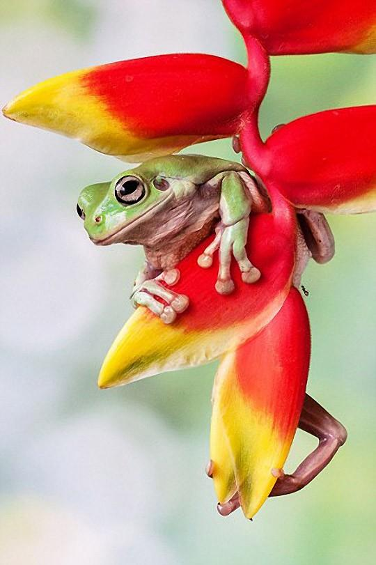 frogs08 Царевны лягушки