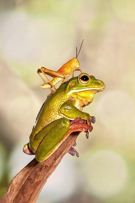 frogs09 Царевны лягушки