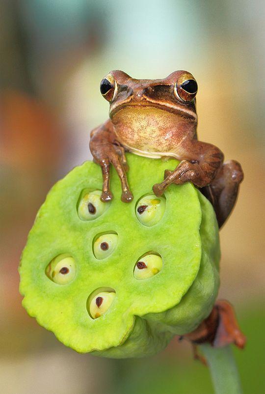 frogs10 Царевны лягушки