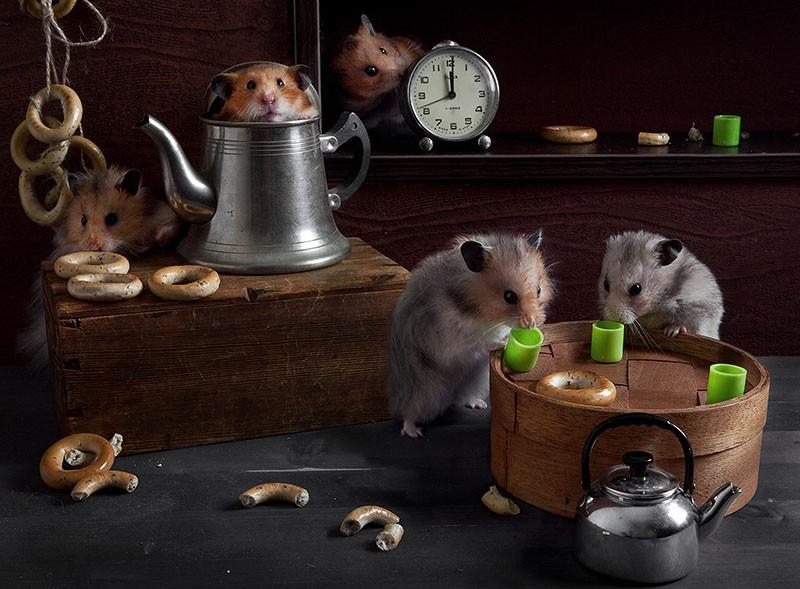 hamsters06 Натюрморты с хомяками