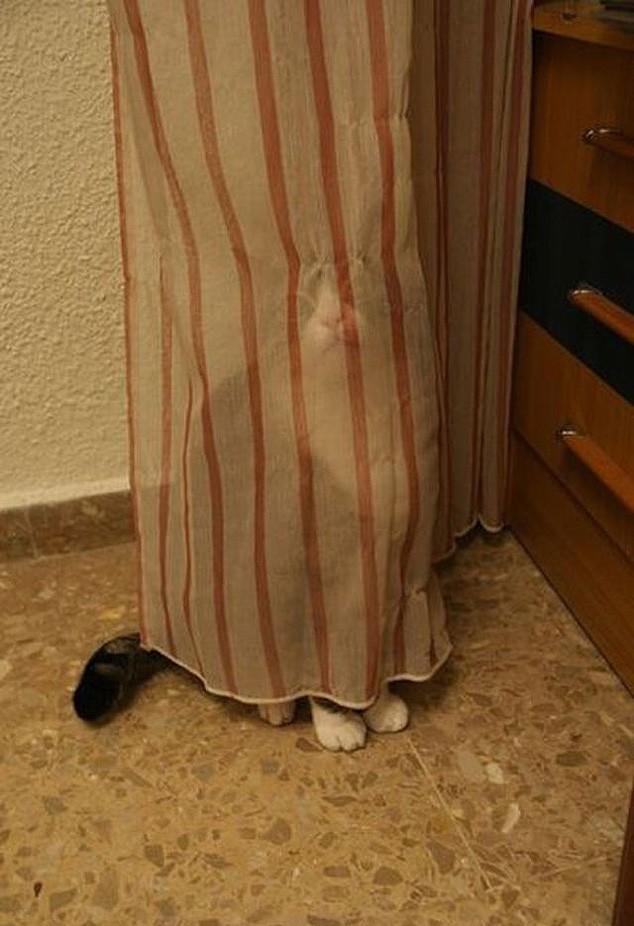 hidingcats01 Кошки, которые не умеют играть в прятки