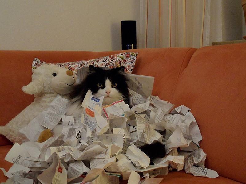 hidingcats02 Кошки, которые не умеют играть в прятки