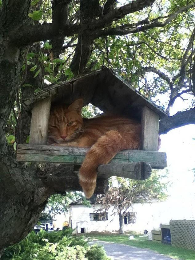hidingcats04 Кошки, которые не умеют играть в прятки