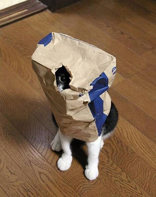 hidingcats05 Кошки, которые не умеют играть в прятки