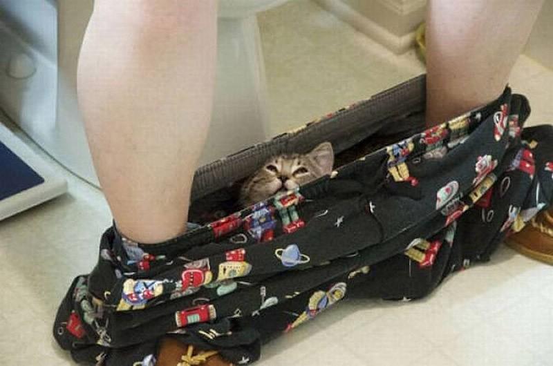 hidingcats07 Кошки, которые не умеют играть в прятки