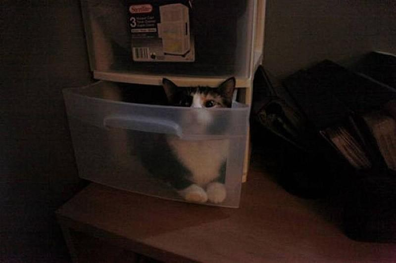 hidingcats08 Кошки, которые не умеют играть в прятки