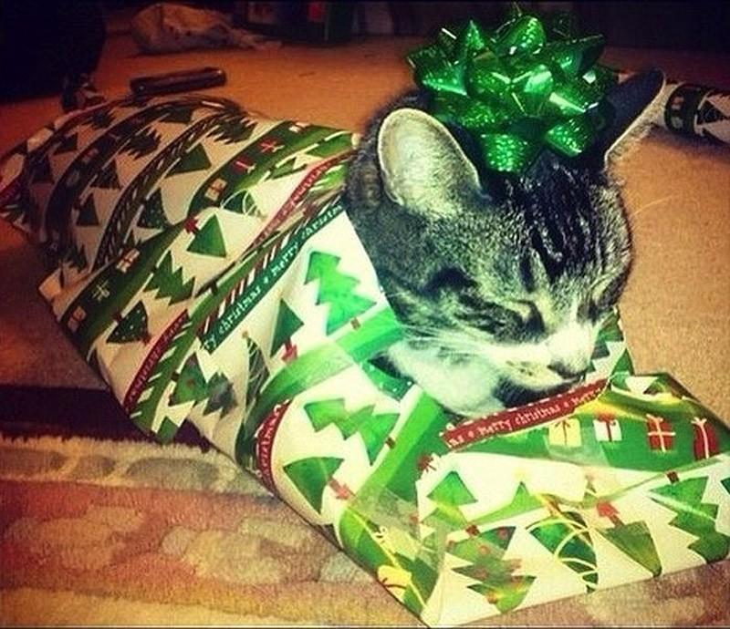 hidingcats09 Кошки, которые не умеют играть в прятки