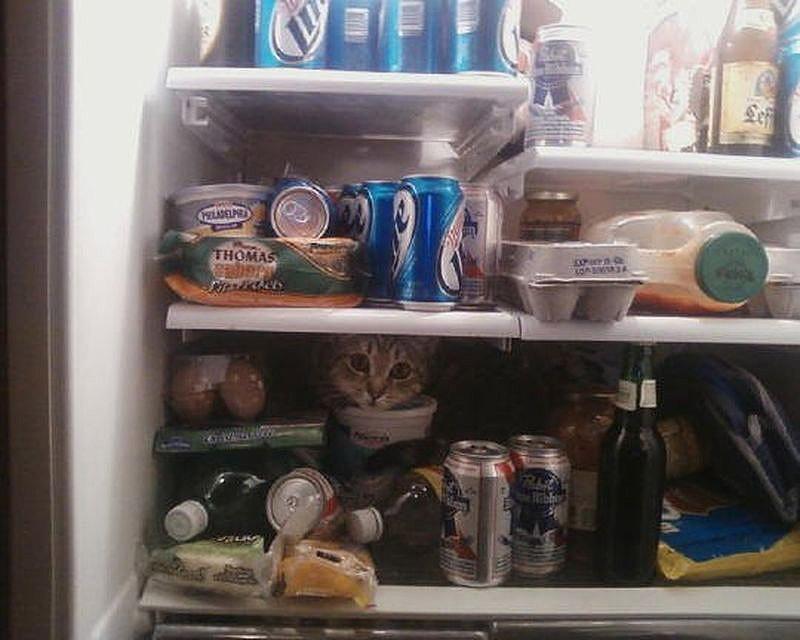 hidingcats10 Кошки, которые не умеют играть в прятки