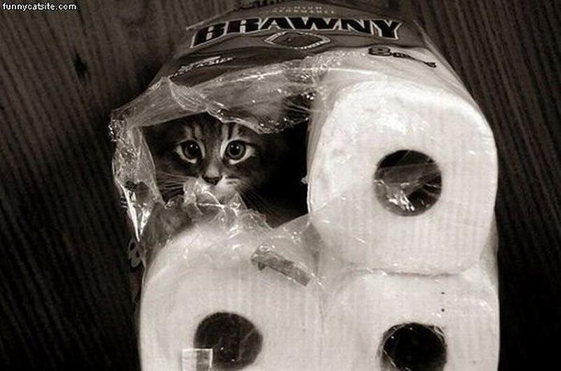 hidingcats11 Кошки, которые не умеют играть в прятки