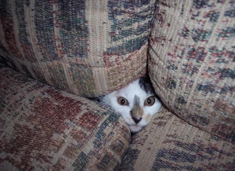 hidingcats12 Кошки, которые не умеют играть в прятки