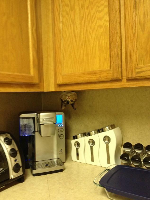 hidingcats13 Кошки, которые не умеют играть в прятки
