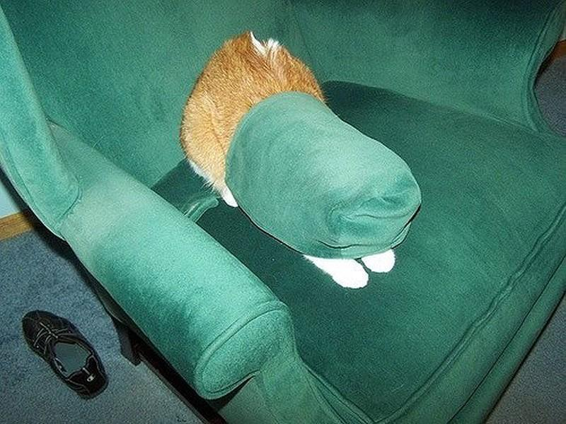 hidingcats15 Кошки, которые не умеют играть в прятки
