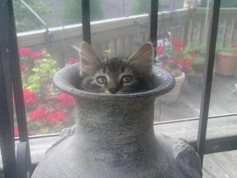 hidingcats17 Кошки, которые не умеют играть в прятки