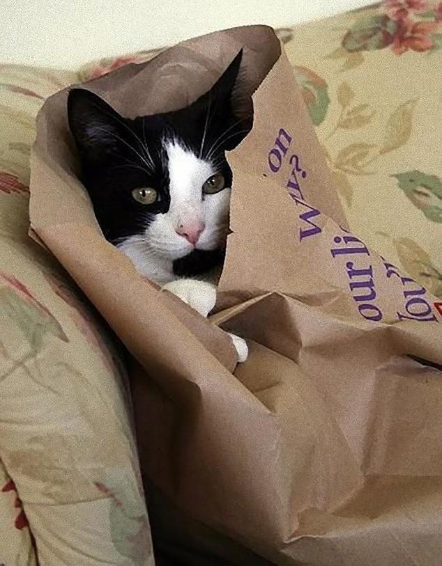 hidingcats19 Кошки, которые не умеют играть в прятки