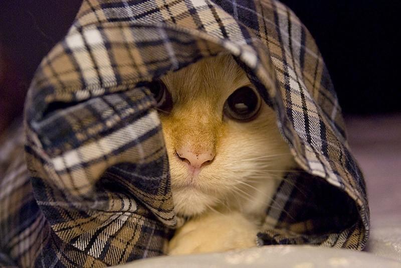 hidingcats20 Кошки, которые не умеют играть в прятки