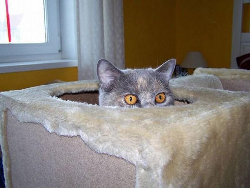 hidingcats21 Кошки, которые не умеют играть в прятки