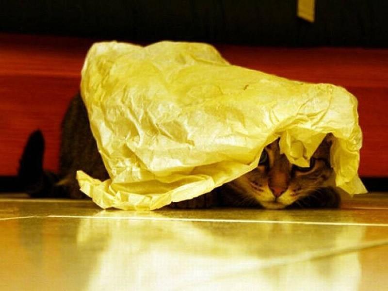 hidingcats22 Кошки, которые не умеют играть в прятки