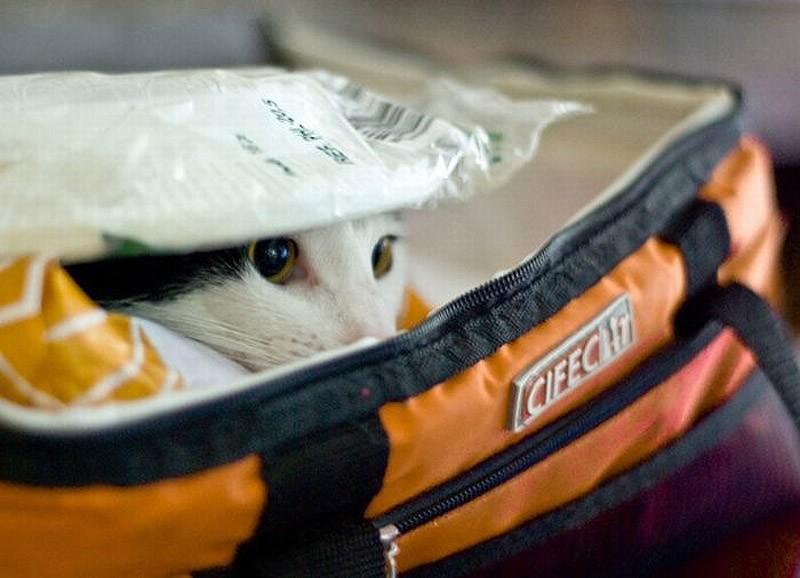 hidingcats23 Кошки, которые не умеют играть в прятки