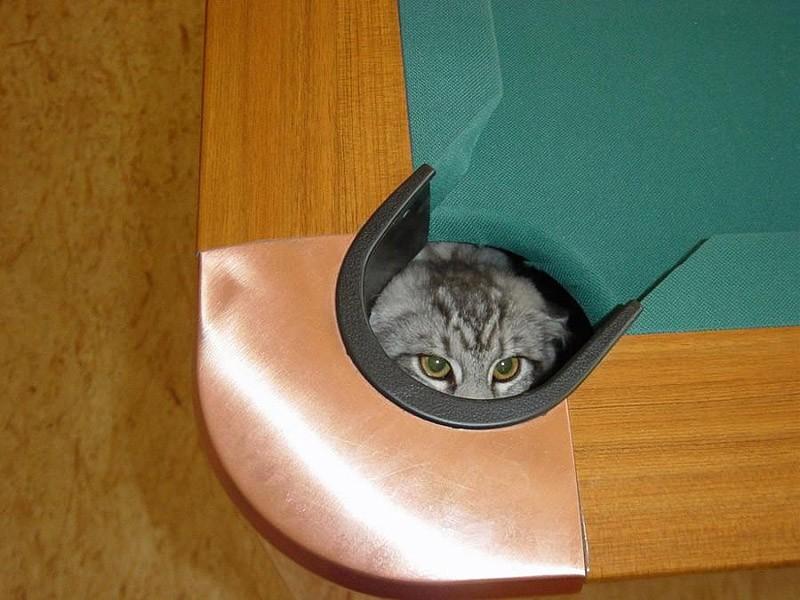 hidingcats25 Кошки, которые не умеют играть в прятки