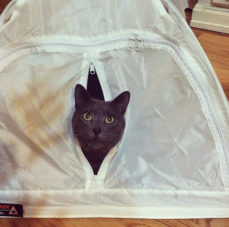 hidingcats27 Кошки, которые не умеют играть в прятки