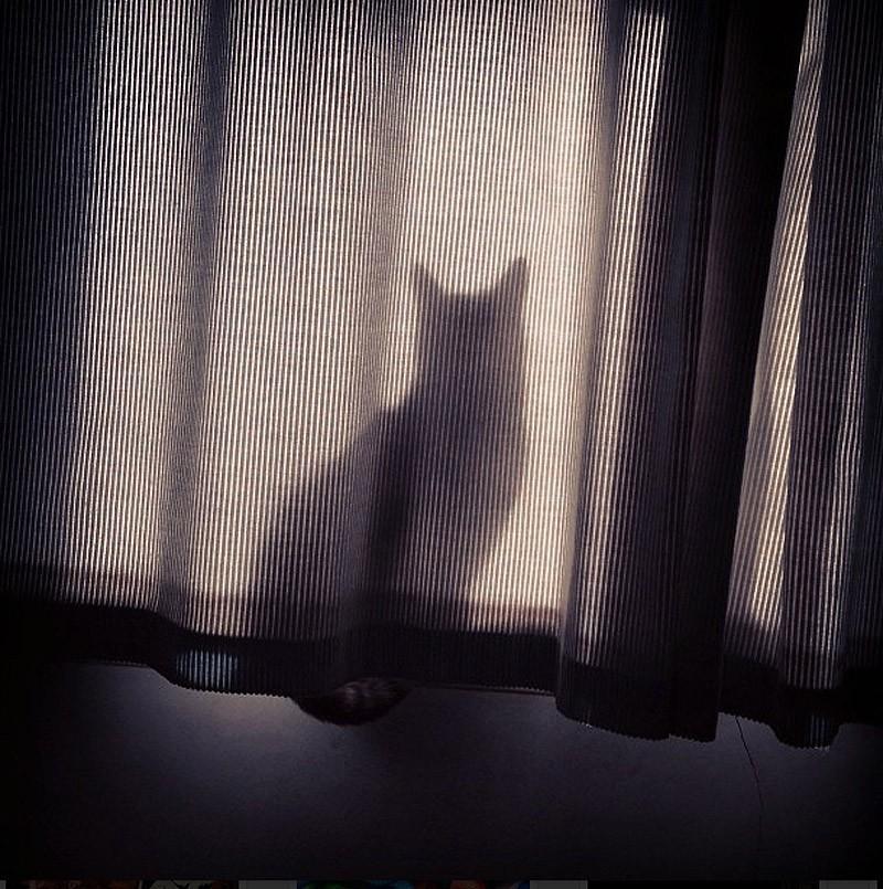 hidingcats28 Кошки, которые не умеют играть в прятки