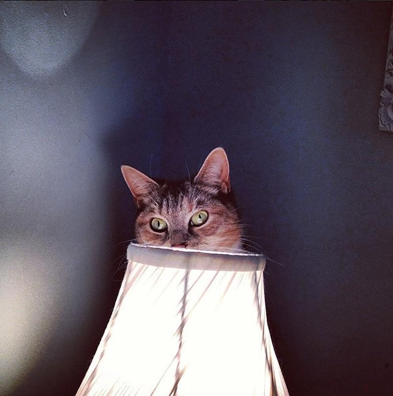 hidingcats29 Кошки, которые не умеют играть в прятки