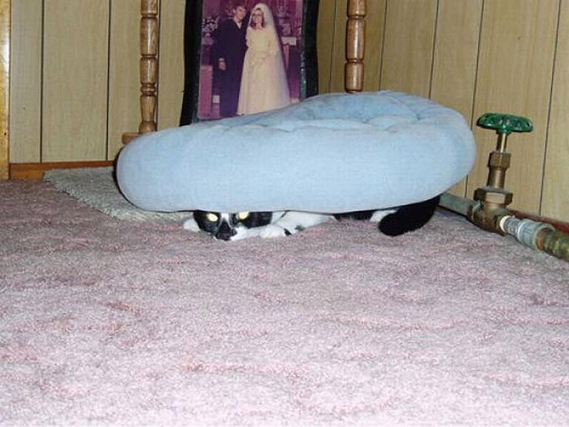 hidingcats31 Кошки, которые не умеют играть в прятки
