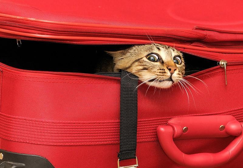 hidingcats32 Кошки, которые не умеют играть в прятки