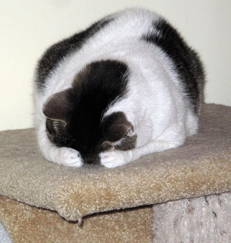 hidingcats35 Кошки, которые не умеют играть в прятки
