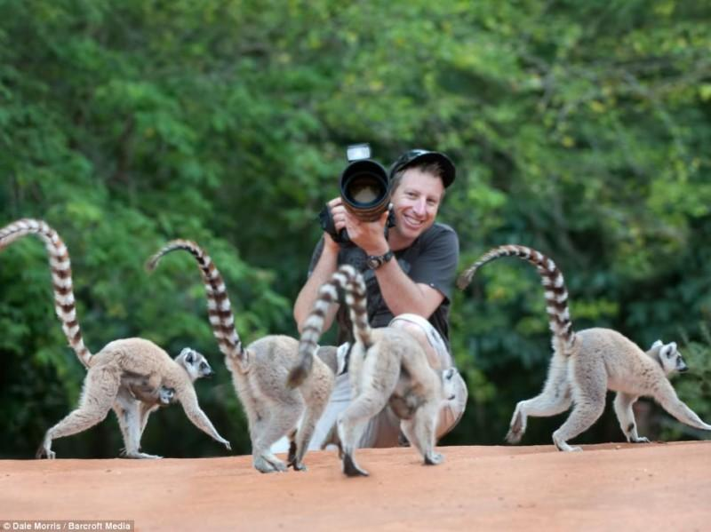 Прыгающие лемуры Мадагаскара
