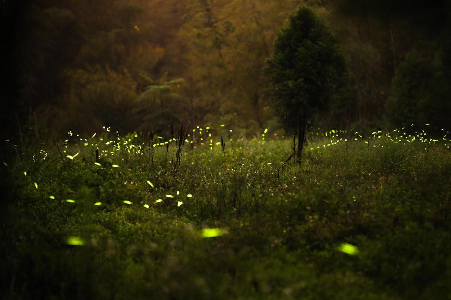 Картинки светлячки ночью
