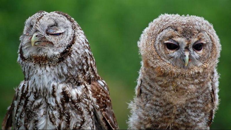 owls17 Обиженные совушки