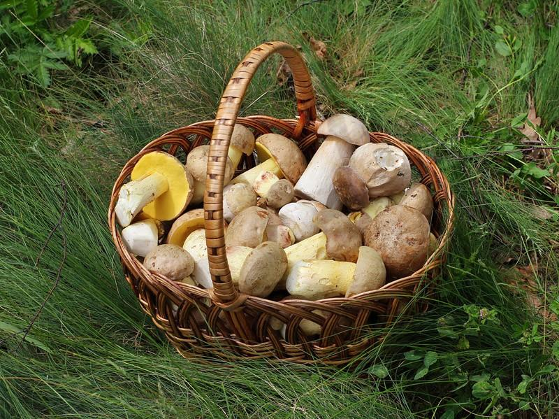 poisony07 10 ядовитых фруктов и овощей, которые мы едим каждый день