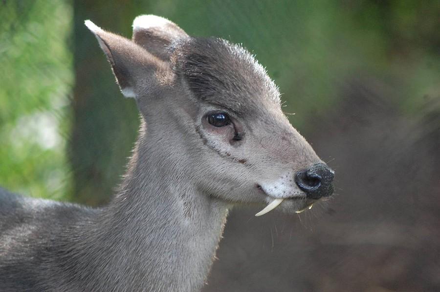 rareanimals21 Животные, о существовании которых вы может даже и не знали