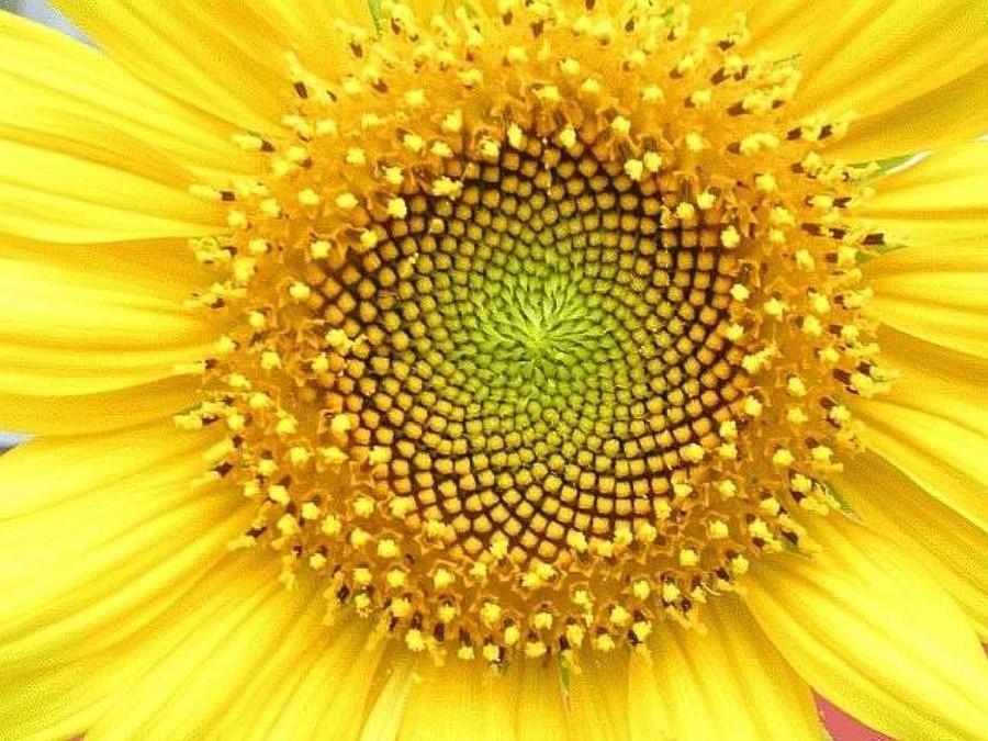 symmetry03 10 превосходных примеров симметрии в природе