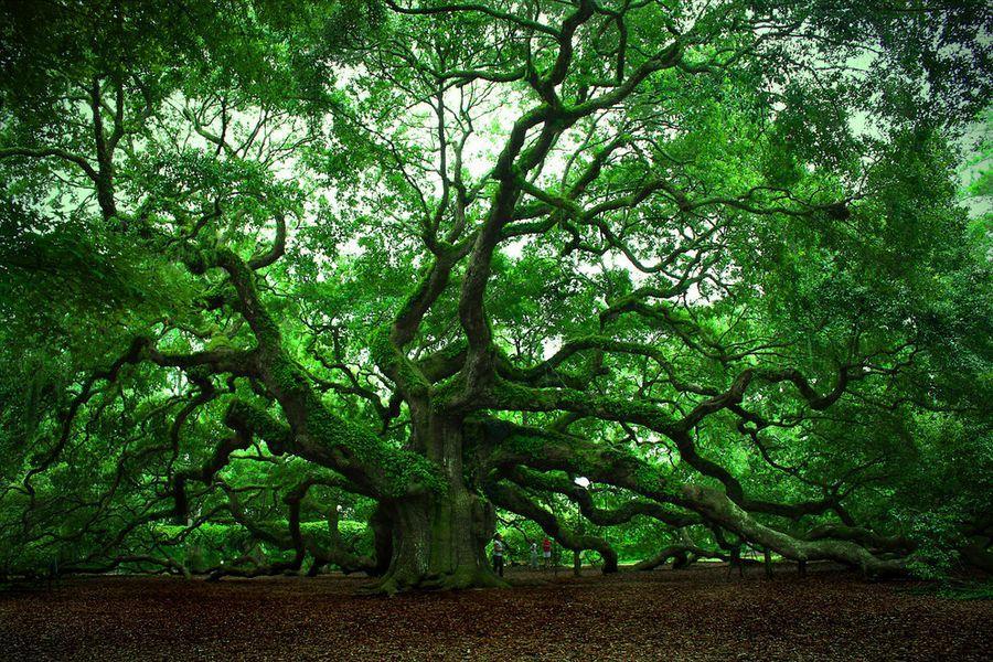 trees01 Самые странные деревья в мире