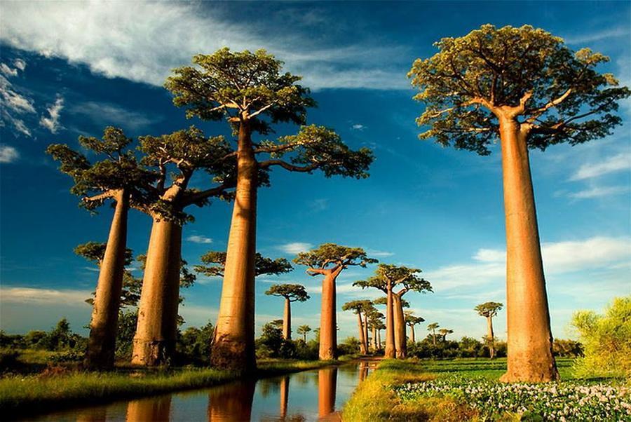 trees03 Самые странные деревья в мире