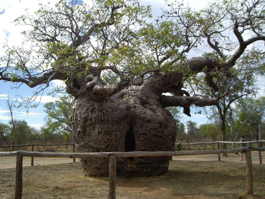 trees04 Самые странные деревья в мире