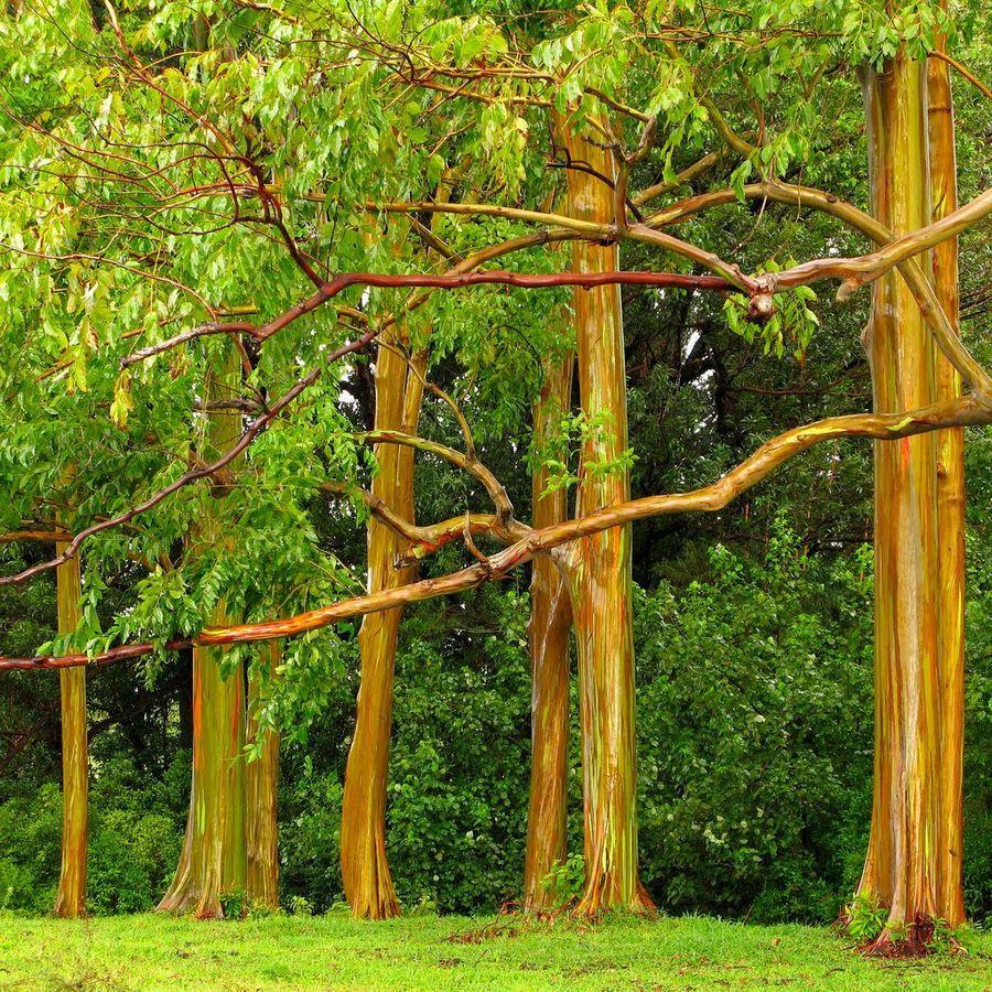 trees05 Самые странные деревья в мире