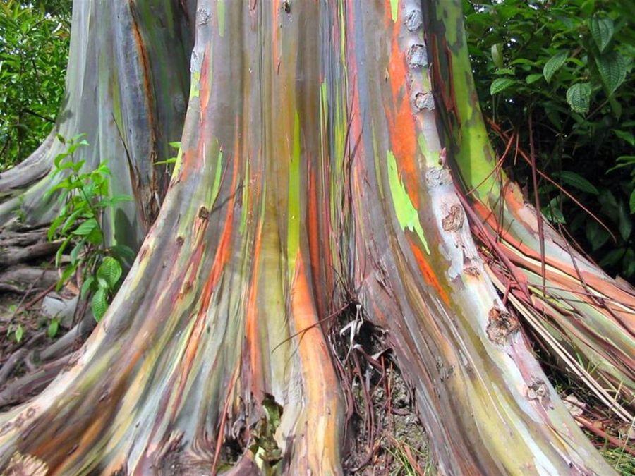 книжка фото красивых необычных деревьев секс-символ страны