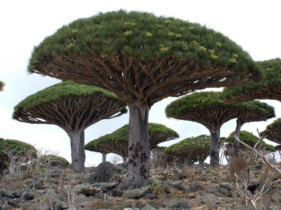 trees07 Самые странные деревья в мире